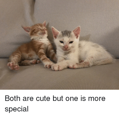 Cute, One, and Them: Both are cute but one is more special