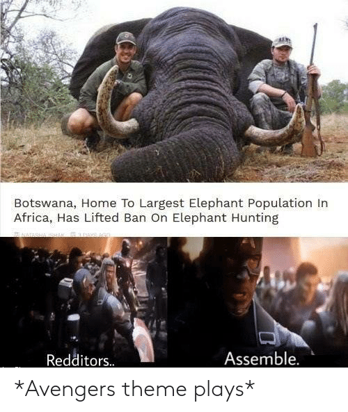 Africa, Hunting, and Avengers: Botswana, Home To Largest Elephant Population In  Africa, Has Lifted Ban On Elephant Hunting  Assemble.  Redditors. *Avengers theme plays*