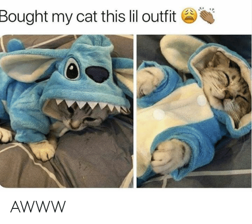 Grumpy Cat: Bought my cat this lil outfit AWWW