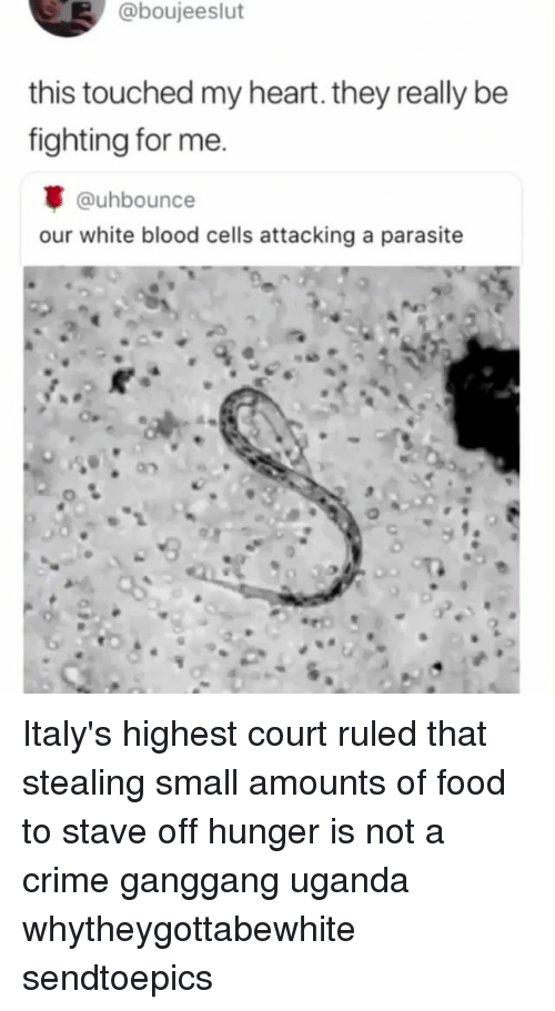 parasite: @boujeeslut  this touched my heart. they really be  fighting for me.  @uhbounce  our white blood cells attacking a parasite Italy's highest court ruled that stealing small amounts of food to stave off hunger is not a crime ganggang uganda whytheygottabewhite sendtoepics