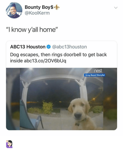 """Memes, Abc13, and Home: Bounty Boys-  @KoolKerm  """"I know y'all home""""  ABC13 Houston@abc13houston  Dog escapes, then rings doorbell to get back  inside abc13.co/2OV6bUq  nest  Greg Basel/Storyful 🙋🏻♀️"""