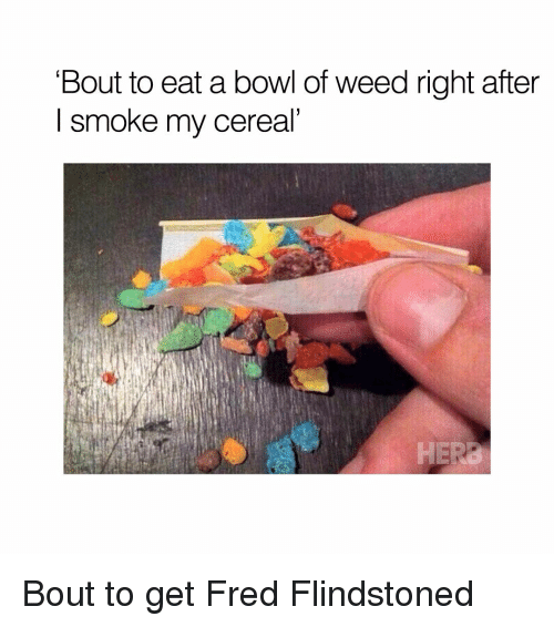 Memes, 🤖, and Fred: Bout to eat a bowl of weed right after  I smoke my cereal Bout to get Fred Flindstoned
