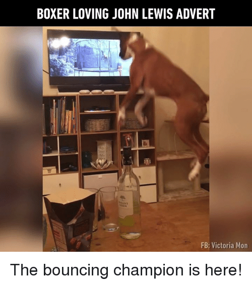 Adverted: BOXER LOVING JOHN LEWIS ADVERT  FB: Victoria Mon The bouncing champion is here!