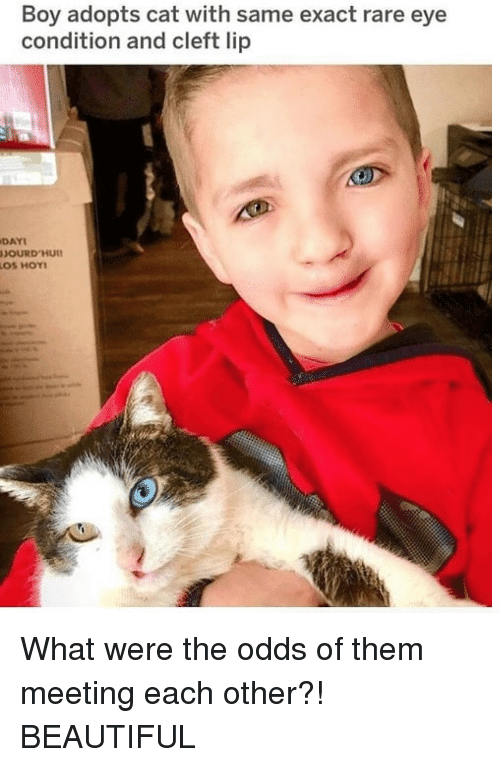 Beautiful, Boy, and Cat: Boy adopts cat with same exact rare eye  condition and cleft lip  DAYI  OS HOY <p>What were the odds of them meeting each other?! BEAUTIFUL<br/></p>