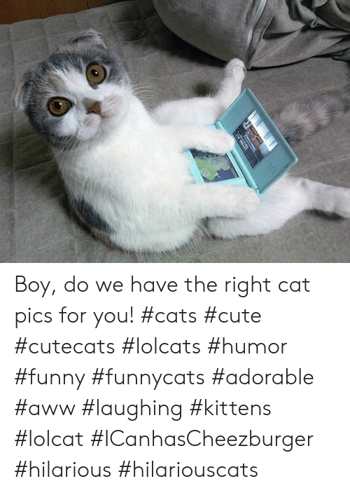 LOLcats: Boy, do we have the right cat pics for you! #cats #cute #cutecats #lolcats #humor #funny #funnycats #adorable #aww #laughing #kittens #lolcat #ICanhasCheezburger #hilarious #hilariouscats