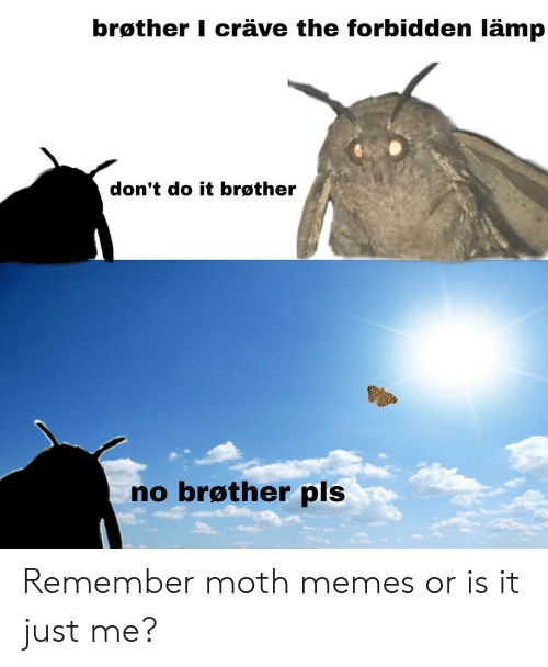 Crave: brøther I cräve the forbidden lämp  don't do it brøther  no brøther pls Remember moth memes or is it just me?