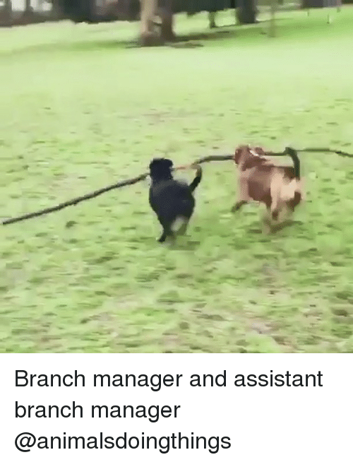 Dank Memes, Manager, and Branch: Branch manager and assistant branch manager @animalsdoingthings