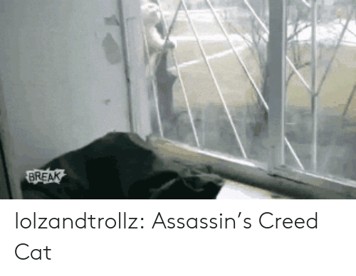 assassins: BREAK lolzandtrollz:  Assassin's Creed Cat