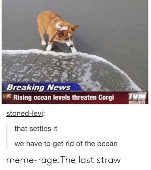 Meme Rage: Breaking News  LIVE Rising ocean levels threaten Corgi T  stoned-levi  that settles it  we have to get rid of the ocean meme-rage:The last straw
