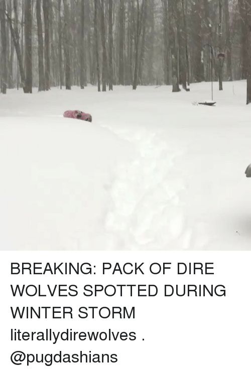 winter storm: BREAKING: PACK OF DIRE WOLVES SPOTTED DURING WINTER STORM literallydirewolves . @pugdashians
