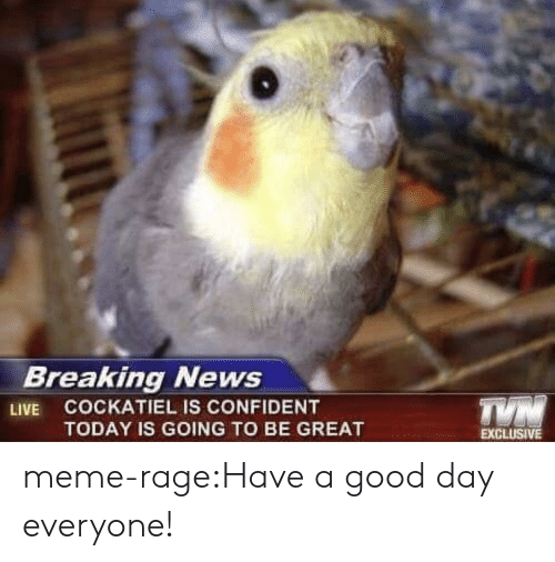 Meme Rage: BreaKingl NeWS  LIVE COCKATIEL IS CONFIDENT  TODAY IS GOING TO BE GREAT  EXCLUSIVE meme-rage:Have a good day everyone!