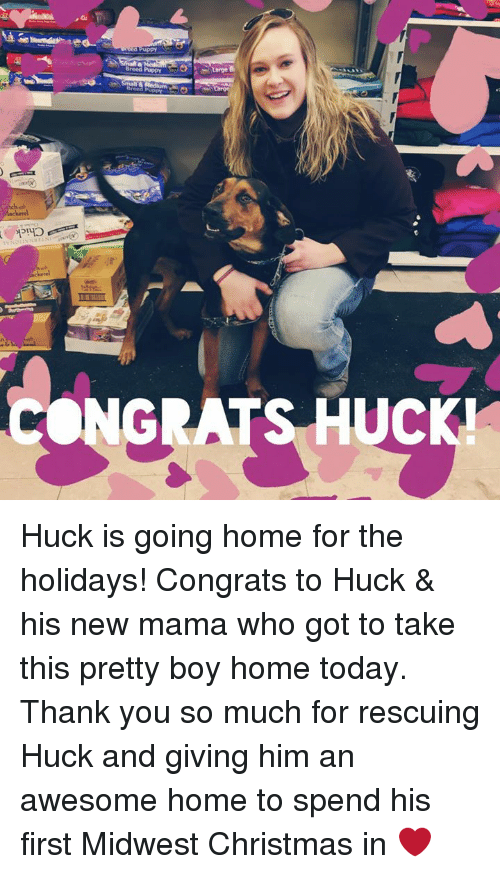 Memes, Puppies, and Puppy: Breed Puppy  CONGRATS UC Huck is going home for the holidays! Congrats to Huck & his new mama who got to take this pretty boy home today. Thank you so much for rescuing Huck and giving him an awesome home to spend his first Midwest Christmas in ❤️