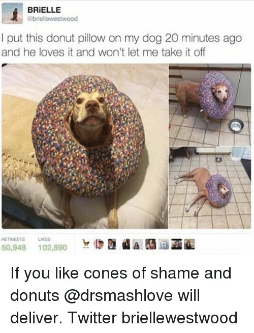Memes, Twitter, and Donuts: BRiELLE  briellewestwood  I put this donut pillow on my dog 20 minutes ago  and he loves it and won't let me take it off  RETWEETS LIKES If you like cones of shame and donuts @drsmashlove will deliver. Twitter briellewestwood