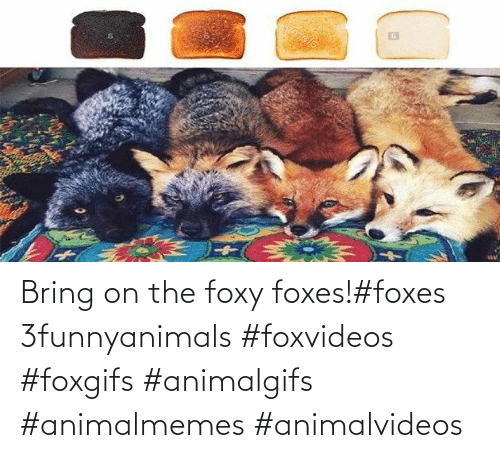 Bring: Bring on the foxy foxes!#foxes 3funnyanimals #foxvideos #foxgifs #animalgifs #animalmemes #animalvideos