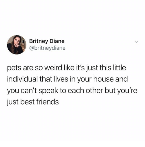 Friends, Weird, and Best: Britney Diane  @britneydiane  pets are so weird like it's just this little  individual that lives in your house and  you can't speak to each other but you're  just best friends