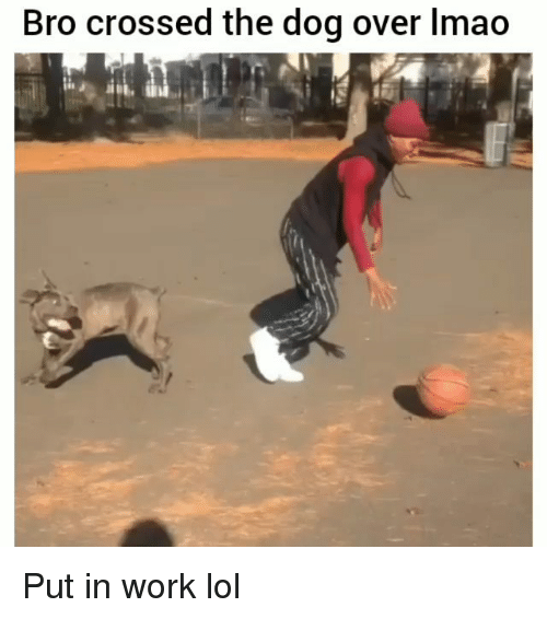 Funny, Lmao, and Lol: Bro crossed the dog over lmao Put in work lol