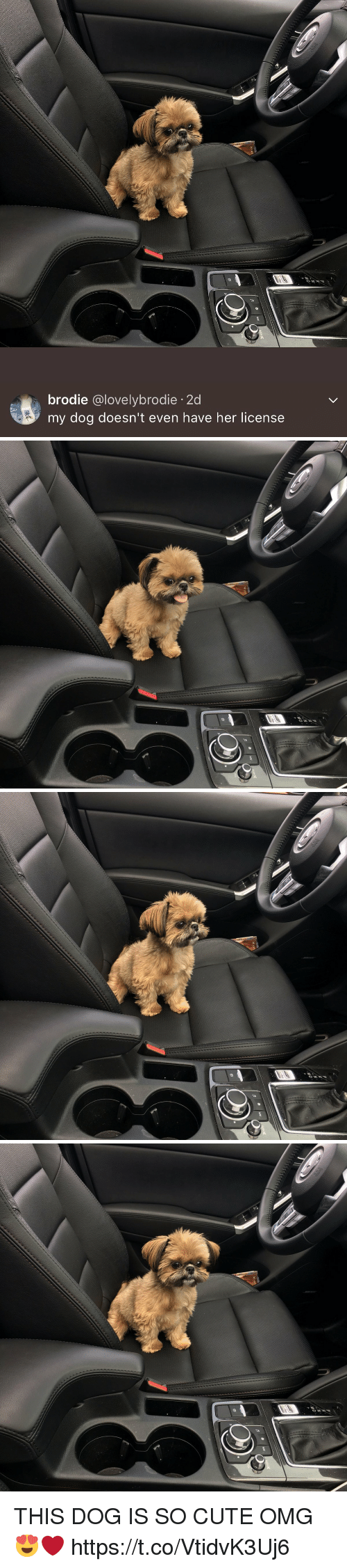 Cute, Omg, and Girl Memes: brodie  @lovely brodie 2d  my dog doesn't even have her license   MD   MD   M-D THIS DOG IS SO CUTE OMG 😍❤️ https://t.co/VtidvK3Uj6