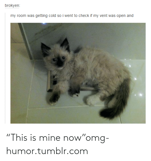 """Mine Now: brokyen:  my room was getting cold so i went to check if my vent was open and """"This is mine now""""omg-humor.tumblr.com"""
