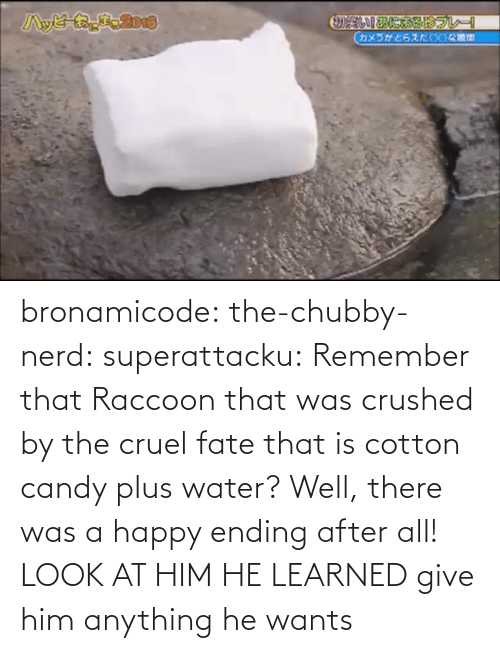 Nerd: bronamicode:  the-chubby-nerd:  superattacku:    Remember that Raccoon that was crushed by the cruel fate that is cotton candy plus water? Well, there was a happy ending after all!     LOOK AT HIM HE LEARNED   give him anything he wants