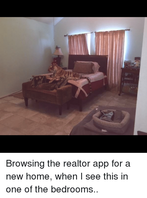 browsing the realtor app for a new home when i 2597502 browsing the realtor app for a new home when i see this in one of