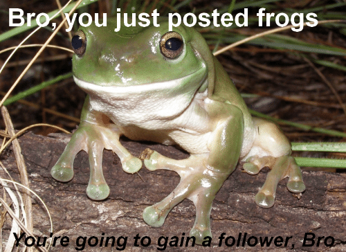 follower: Broyou just posted frogs  Youre going to gain a follower Bro