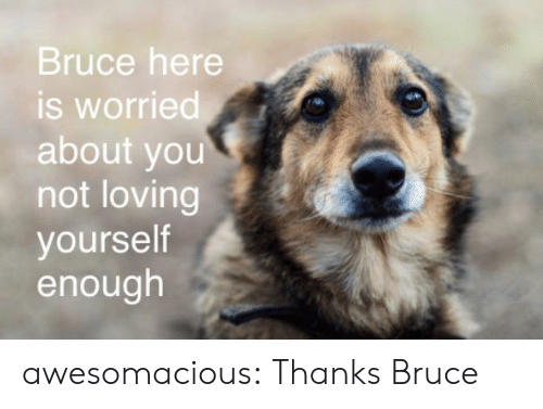 worried: Bruce here  is worried  about you  not loving  yourself  enough awesomacious:  Thanks Bruce