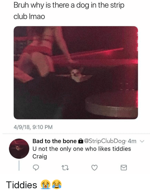 Bad To The Bone: Bruh why is there a dog in the strip  club Imao  as  4/9/18, 9:10 PM  Bad to the bone â@StripClubDog 4m  U not the only one who likes tiddies  Craig Tiddies 😭😂