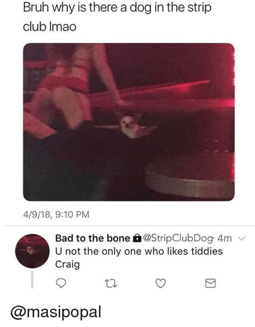 Bad To The Bone: Bruh why is there a dog in the strip  club Imao  as  4/9/18, 9:10 PM  Bad to the bone à@StripClubDog 4m  U not the only one who likes tiddies  Craig @masipopal
