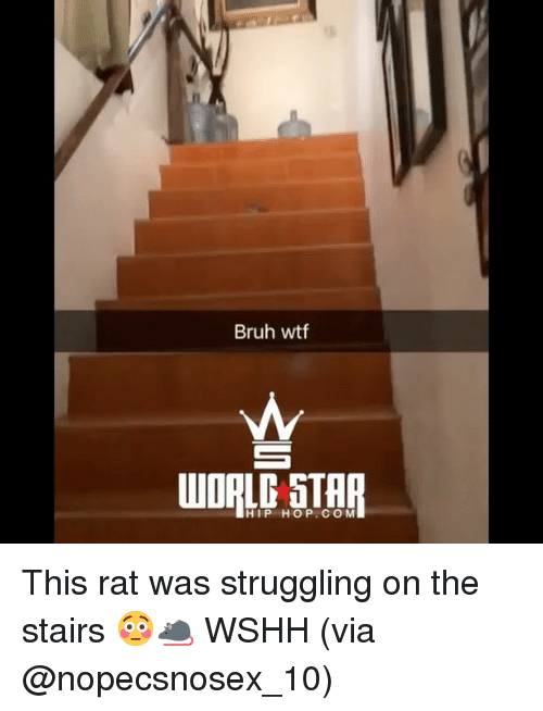 Bruh, Memes, and Wshh: Bruh wtf  AL STAR  HIP HOP.CO M This rat was struggling on the stairs 😳🐀 WSHH (via @nopecsnosex_10)