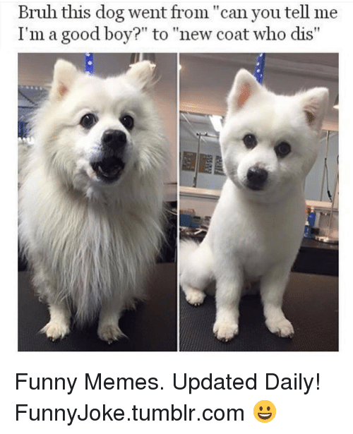"""Who dis: Brulh this dog went from """" can you tell me  I'm a good boy?"""" to """"new coat who dis"""" Funny Memes. Updated Daily! ⇢ FunnyJoke.tumblr.com 😀"""