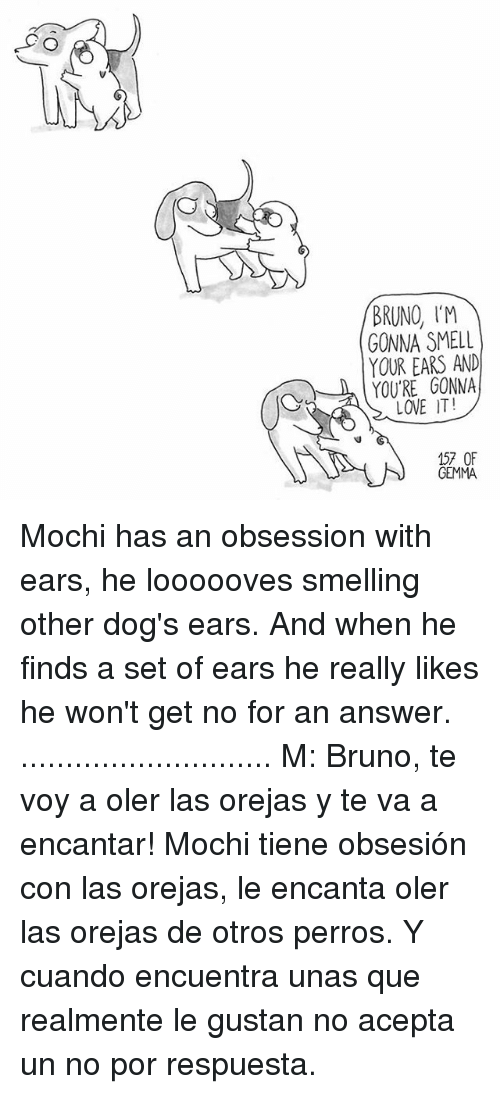 Dogs, Love, and Memes: BRUNO IM  GONNA SMELL  YOUR EARS AND  YOU'RE GONNA  LOVE IT!  157 OF  GEMMA Mochi has an obsession with ears, he loooooves smelling other dog's ears. And when he finds a set of ears he really likes he won't get no for an answer. ............................ M: Bruno, te voy a oler las orejas y te va a encantar! Mochi tiene obsesión con las orejas, le encanta oler las orejas de otros perros. Y cuando encuentra unas que realmente le gustan no acepta un no por respuesta.