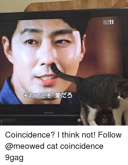 I Think Not: BS11 Coincidence? I think not! Follow @meowed cat coincidence 9gag
