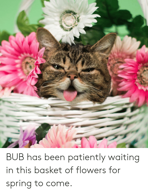 patiently: BUB has been patiently waiting in this basket of flowers for spring to come.