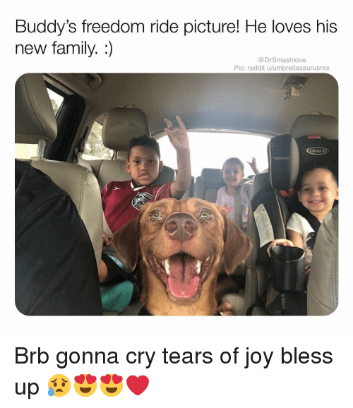 buddys: Buddy's freedom ride picture! He loves his  new family. :)  @DrSmashlove  Pic: reddit u/umbrellasaurusrex  GRACO Brb gonna cry tears of joy bless up 😥😍😍❤️