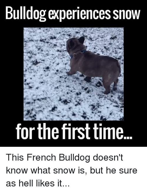 french bulldog: Bulldog experiences Snow  forthe first time This French Bulldog doesn't know what snow is, but he sure as hell likes it...