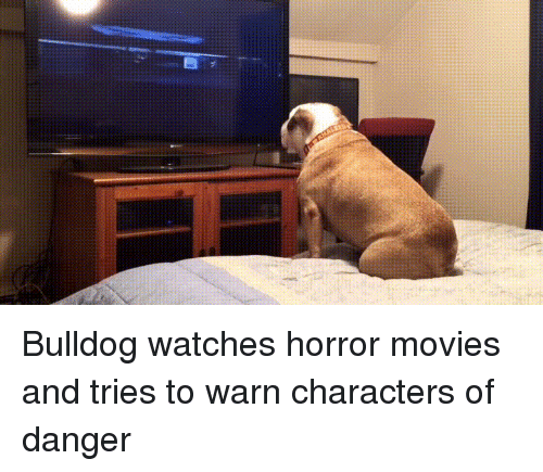 warne: Bulldog watches horror movies and tries to warn characters of danger