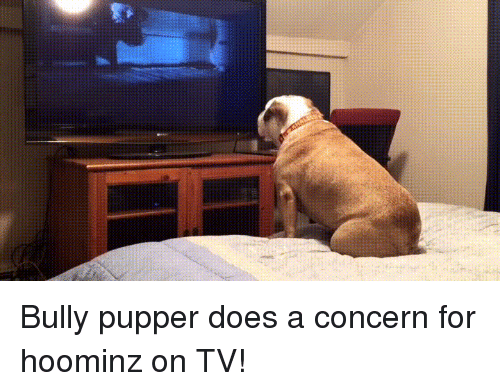 warne: Bully pupper does a concern for hoominz on TV!