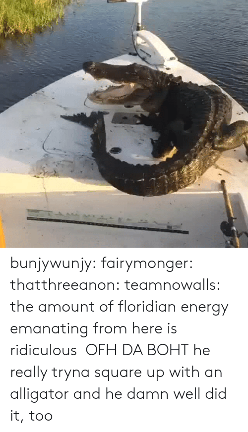 Square Up: bunjywunjy: fairymonger:  thatthreeanon:   teamnowalls: the amount of floridian energy emanating from here is ridiculous OFH DA BOHT   he really tryna square up with an alligator    and he damn well did it, too