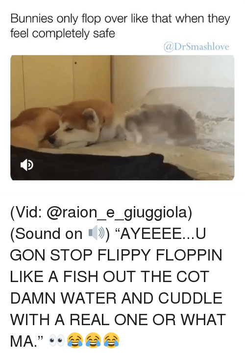 "Bunnies, Memes, and Fish: Bunnies only flop over like that when they  feel completely safe  @DrSmashlove (Vid: @raion_e_giuggiola) (Sound on 🔊) ""AYEEEE...U GON STOP FLIPPY FLOPPIN LIKE A FISH OUT THE COT DAMN WATER AND CUDDLE WITH A REAL ONE OR WHAT MA."" 👀😂😂😂"