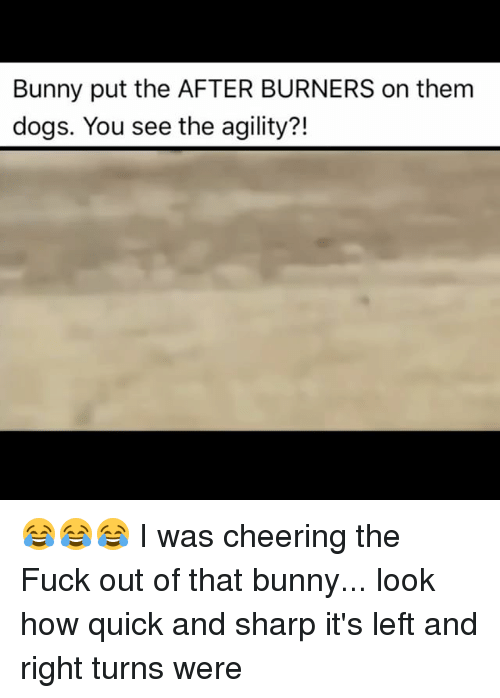 Burners: Bunny put the AFTER BURNERS on them  dogs. You see the agility?! 😂😂😂 I was cheering the Fuck out of that bunny... look how quick and sharp it's left and right turns were