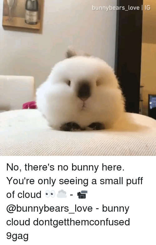 9gag, Love, and Memes: bunnybears_love IG No, there's no bunny here. You're only seeing a small puff of cloud 👀☁️ - 📹 @bunnybears_love - bunny cloud dontgetthemconfused 9gag
