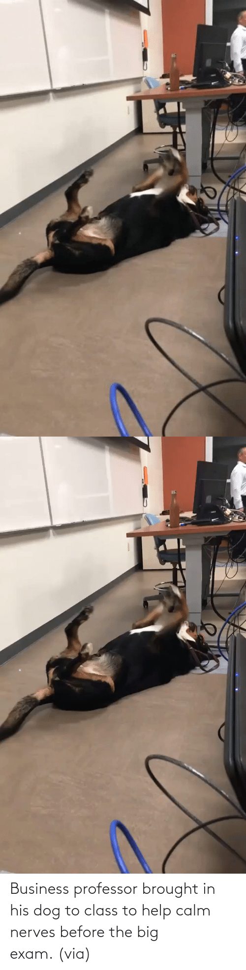 exam: Business professor brought in his dog to class to help calm nerves before the big exam. (via)