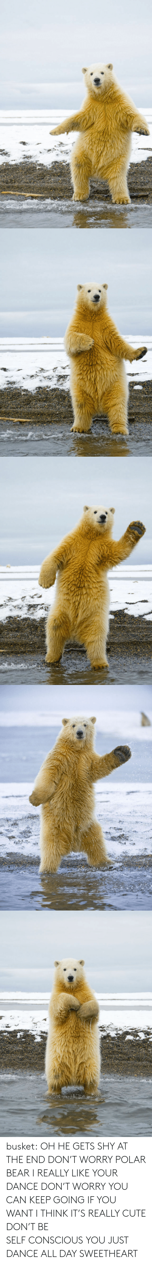 just dance: busket: OH HE GETS SHY AT THE END DON'T WORRY POLAR BEAR I REALLY LIKE YOUR DANCE DON'T WORRY YOU CAN KEEP GOING IF YOU WANT I THINK IT'S REALLY CUTE DON'T BE SELF CONSCIOUS YOU JUST DANCE ALL DAY SWEETHEART