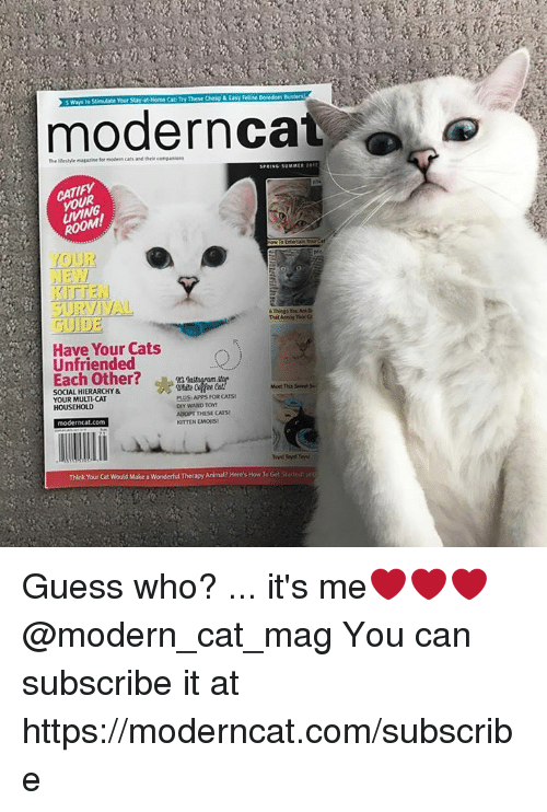Cats, Memes, and Animal: Busters  modern cat  ROOM!  YOUR  SURVIVAL  6 Things You Are D  Have Your Cats  unfriended  Each other?  Meet This seeel 5L  SOCIAL HIERARCHY puusa Apps FOR CATS!  YOUR MULTICAT  DIY MAND TOY!  HOUSEHOLD  AbpPT THESE CATS!  KITTEN EMOISt  modern cat.com  Think Your cat would Make a wonderful Therapy Animal? Here's How To Get start Guess who? ... it's me❤❤❤ @modern_cat_mag You can subscribe it at https://moderncat.com/subscribe