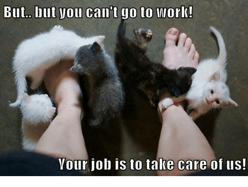 Memes, Work, and Jobs: But.. but Vou can't go to Work!  Vour job is to take care of us!