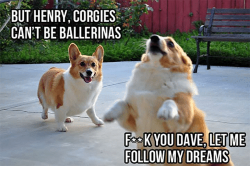 Dank, 🤖, and Ballerina: BUT HENRY, CORGIES  CAN'T BE BALLERINAS  FA K YOU DAVE, LET ME  FOLLOW MY DREAMS
