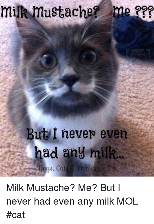 Memes, Never, and 🤖: But I neverp even  had any milk... Milk Mustache? Me?  But I never had even any milk   MOL #cat