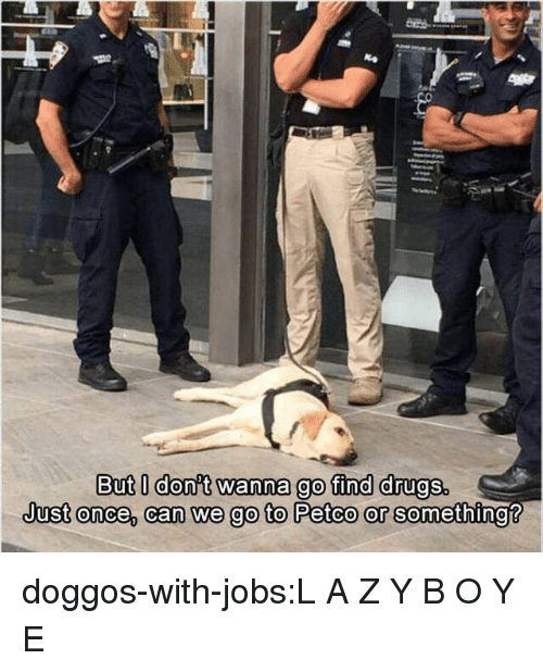 Onee: But l donit wanna go find drugs.  Just onee, can we go to Petco or se doggos-with-jobs:L A Z Y B O Y E