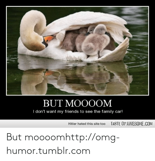 Moooom: BUT MOOOOM  I don't want my friends to see the family car!  TASTE OF AWESOME.COM  Hitler hated this site too But moooomhttp://omg-humor.tumblr.com