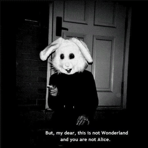 wonderland: But, my dear, this is not Wonderland  and you are not Alice